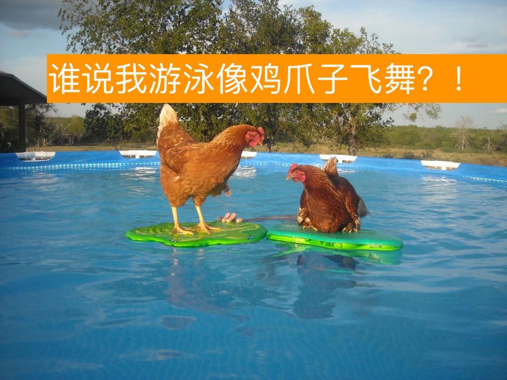 谁说我游泳像鸡爪子飞舞?!